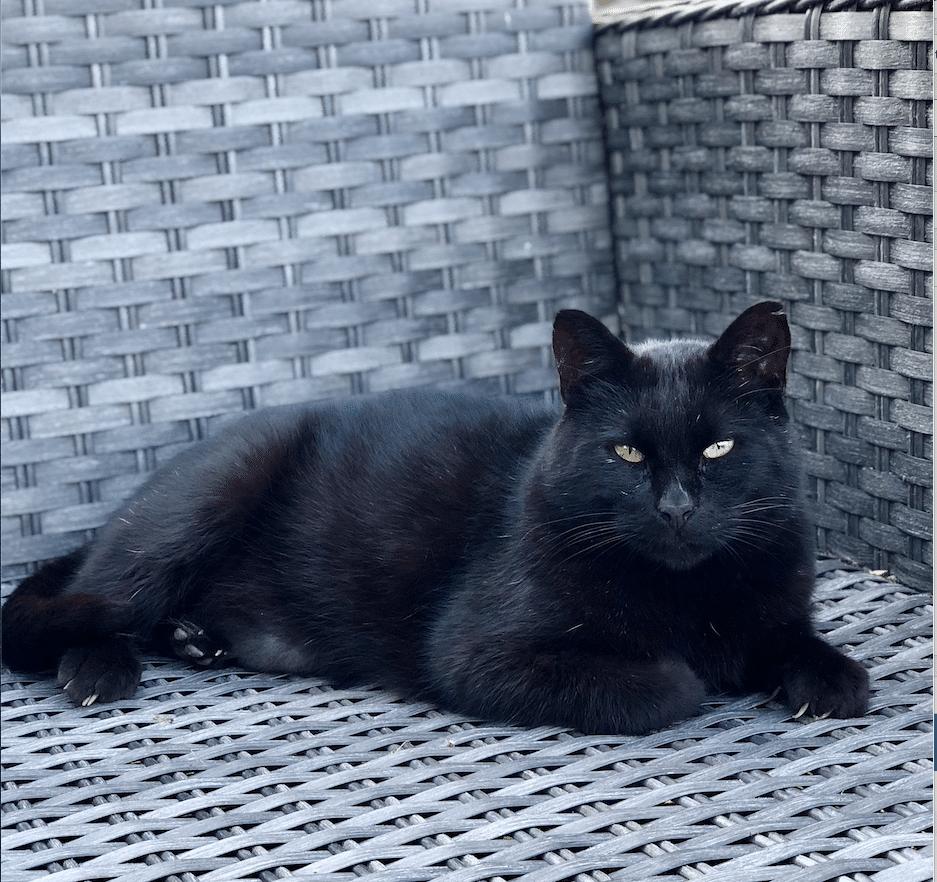 Kattepasning booking